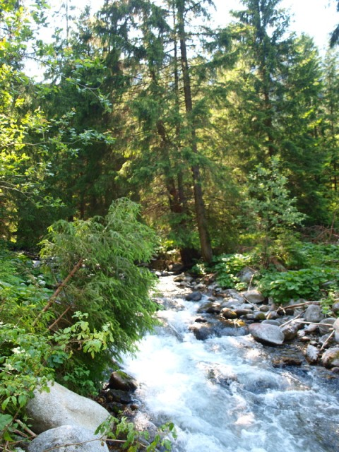 Potok v Demänovskej doline Foto Martha Bielska