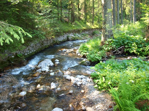 Potok v Demänovskej doline 2