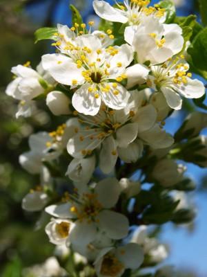 Kvety stromu_2 Martha Bielska